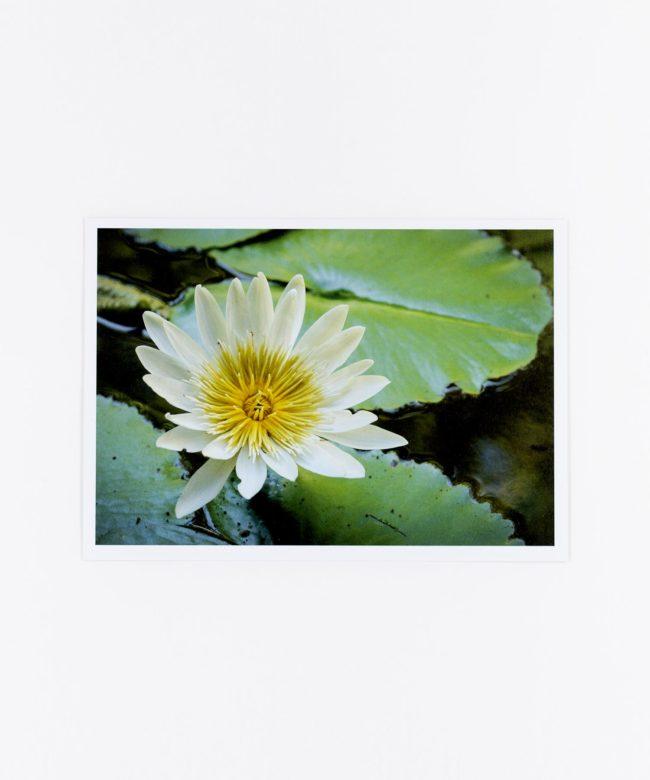 Fotopostkarte Lotosblüte