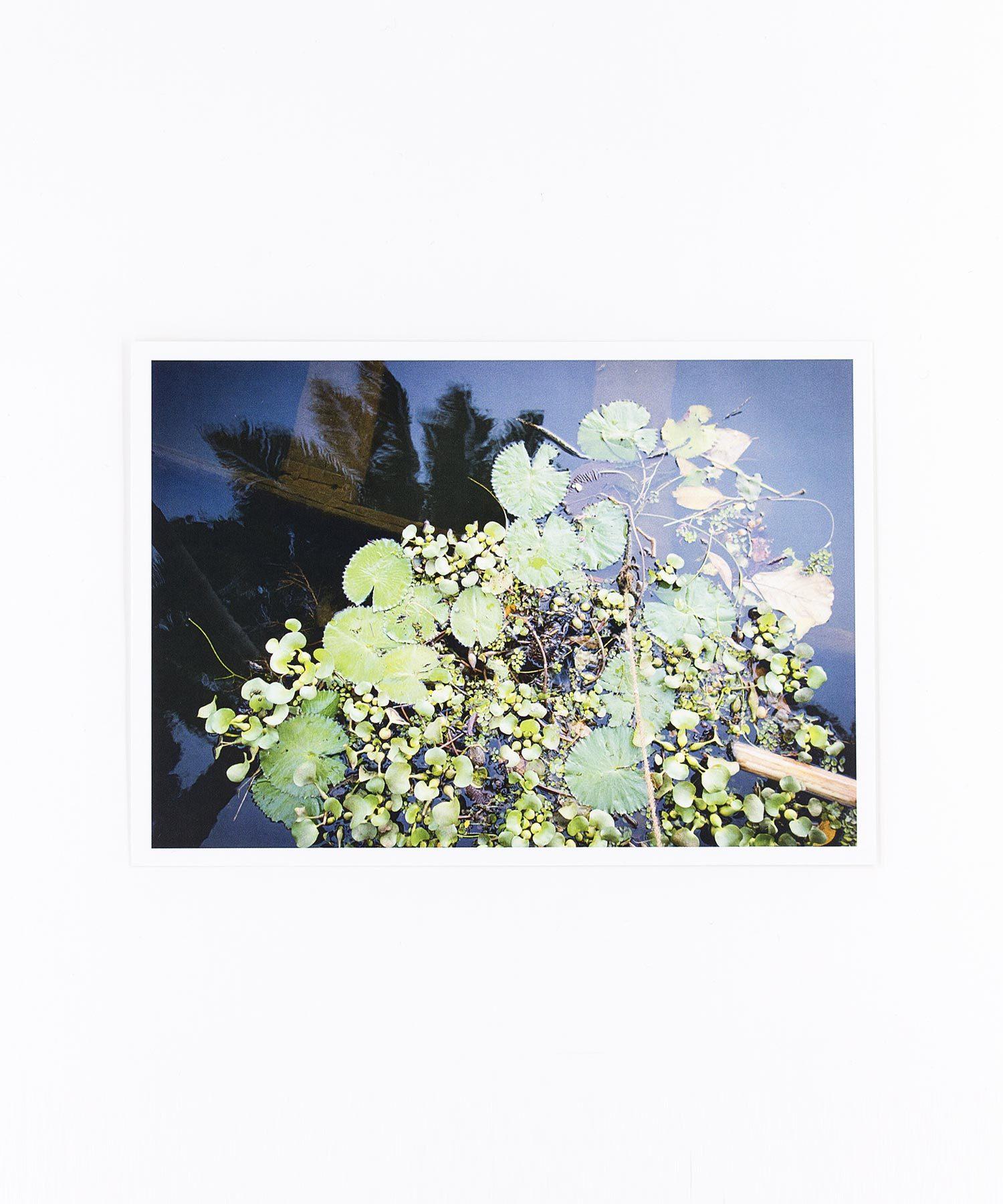 Fotopostkarte Wasserpflanzen